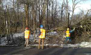 Sleety_rain_destroys_trees_Budapest