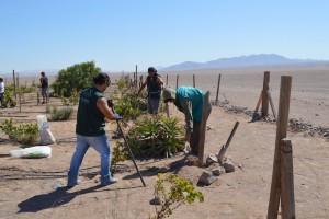 Voluntarios en el Desierto de Antofagasta, Chile