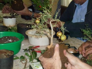 Bonsai workshop