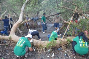 Caring for our Coastal Treasures – Restoring Mumbai's Mangroves (India)