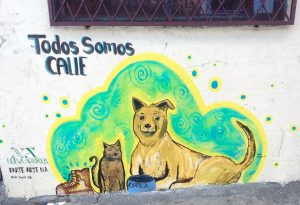 Giving color to the streets of the capital (San Jose, Costa Rica)