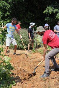 Cultivar un huerto comunitario (Tel-Aviv, Israel)