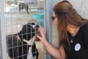 Ayuda para los refugios de perros (Chipre)